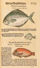 Conrad Gesner - Thierbuch/Vogelbuch/Fischbuch