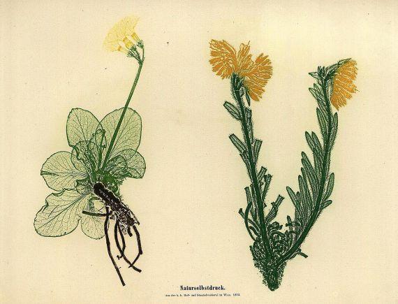 Alois Auer Ritter von Welsbach - Die Entdeckung des Naturselbstdruckes. 1854.