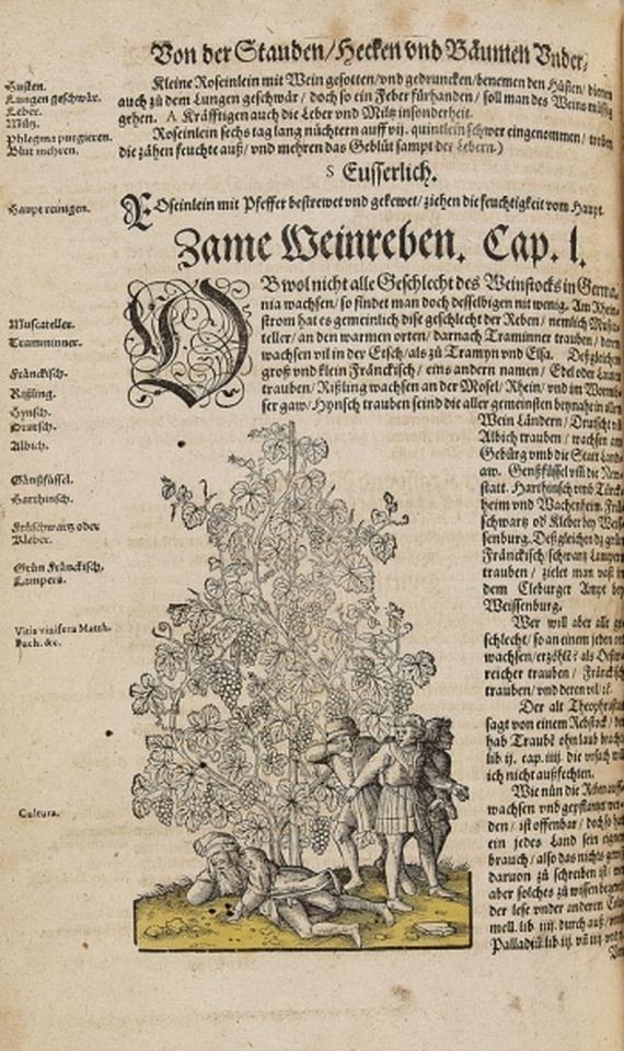 Hironymus Bock - Kreütterbuch. 1595