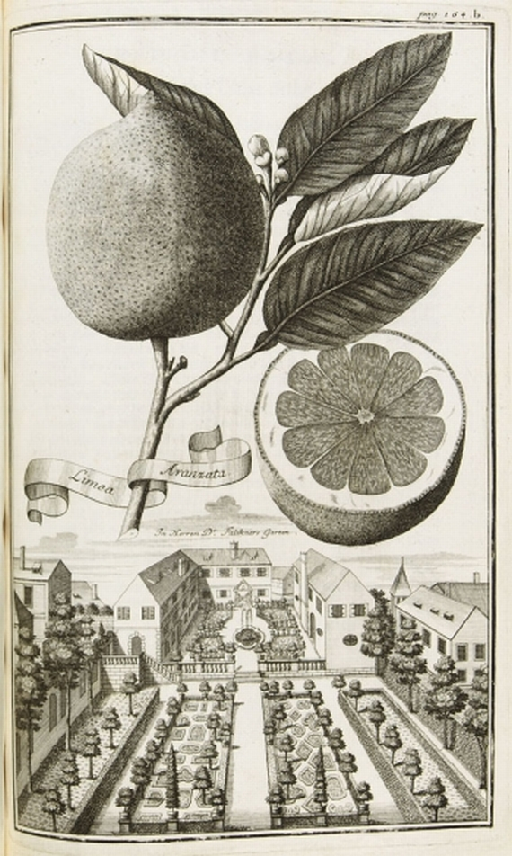 Johann Christoph Volckamer - Nürnbergische Hesperides. Teil I. 1708.
