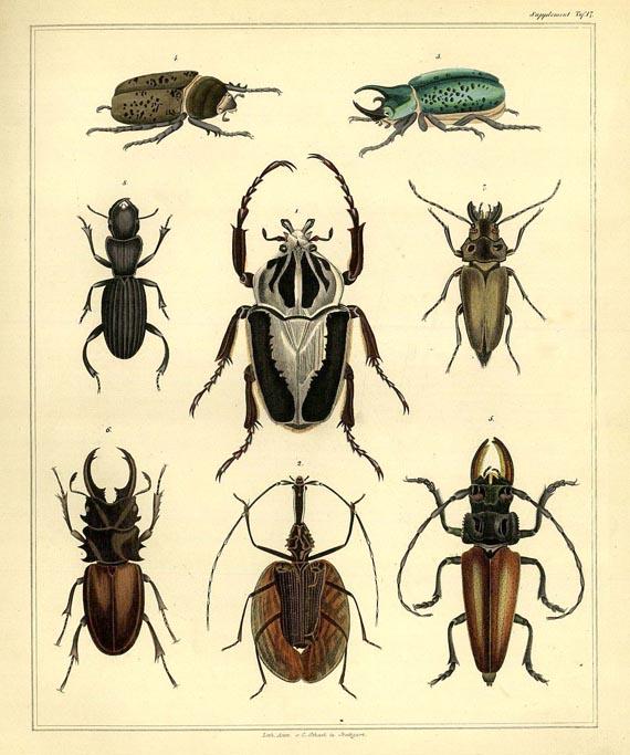 Lorenz Oken - Naturgeschichte, 2 Bde. 1843