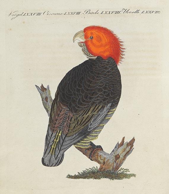 Friedrich Johann Justin Bertuch - Bertuch, F. J., Bilderbuch. Bd. 7. 1810