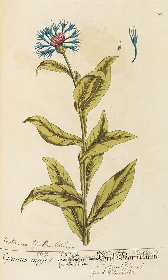 Elisabeth Blackwell - Herbarium Blackwellianum. 6 Bde. 1750