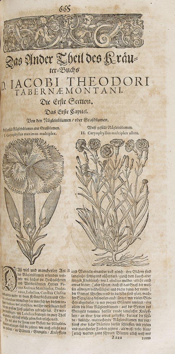 Jacobus Theodorus Tabernaemontanus - Neu volkommen Kräuter-Buch. 1687