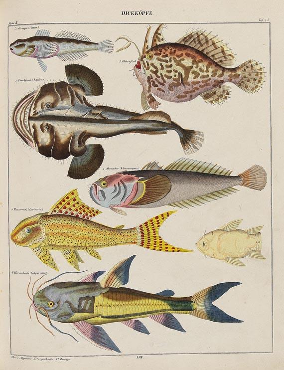 Lorenz Oken - Abbildungen zu Oken`s allgemeiner Naturgeschichte für alle Stände. Stuttgart, 1843