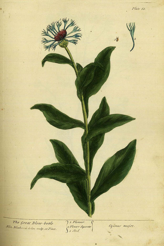 Elisabeth Blackwell - Curious Herbal, 2 Bde. 1739