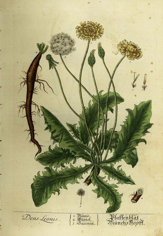 Elisabeth Blackwell - Vermehrtes Kräuterbuch 1754-1773. 6 Bde.