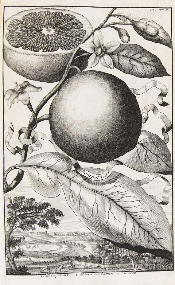 Johann Christoph Volckamer - Nürnbergische Hesperides. 1708