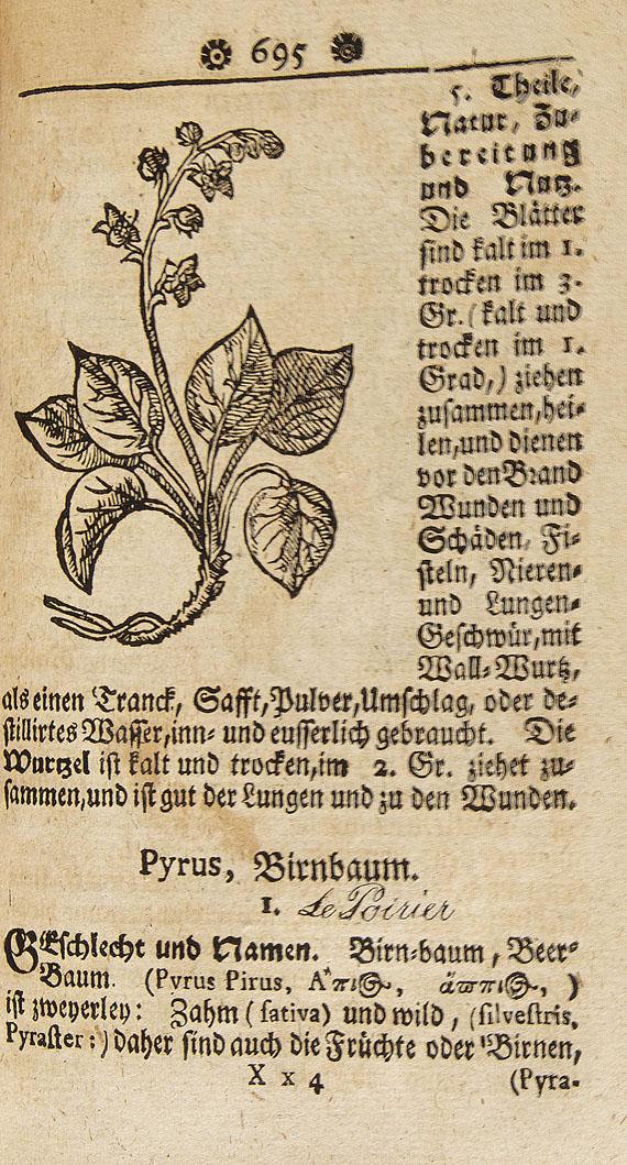 Samuel Müller - Curioser Botanicus, Oder: Sonderbahres Kräuter-Buch. 1730