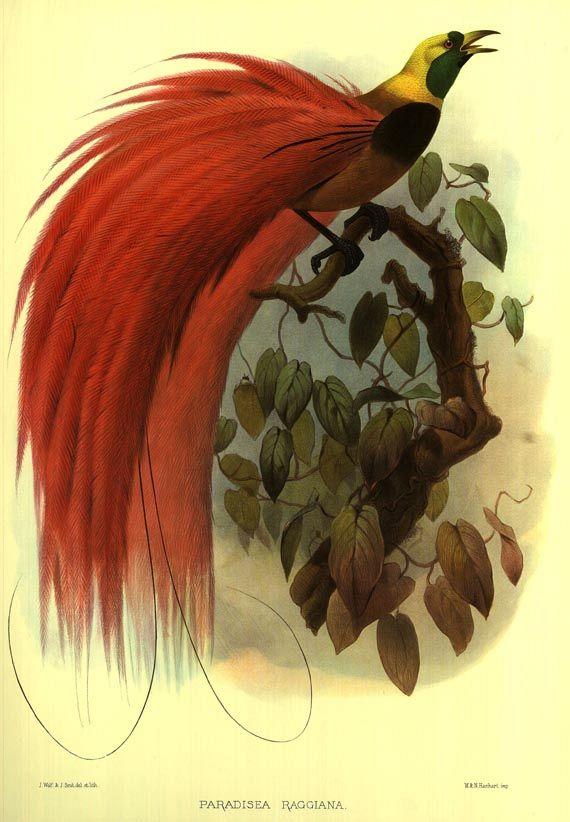 Daniel Giraud Elliot - Birds of Paradise. Faksimile. 1977.