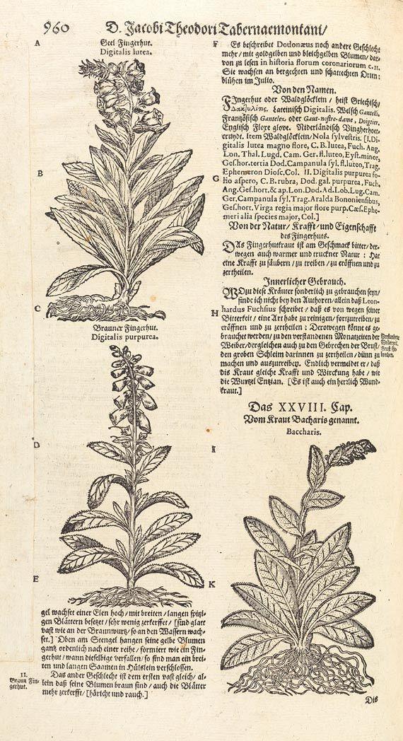 Jacobus Theodorus Tabernaemontanus - Kräuter-Buch. 1687