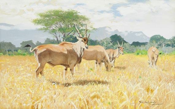 Friedrich Wilhelm Kuhnert - Antilopen