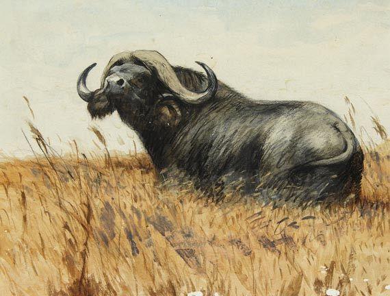 Friedrich Wilhelm Kuhnert - Kaffernbüffel