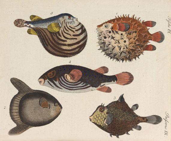 Friedrich Johann Justin Bertuch - Bilderbuch für Kinder, Porte-Feuille des enfants, 1802-1810, 3 Bde.