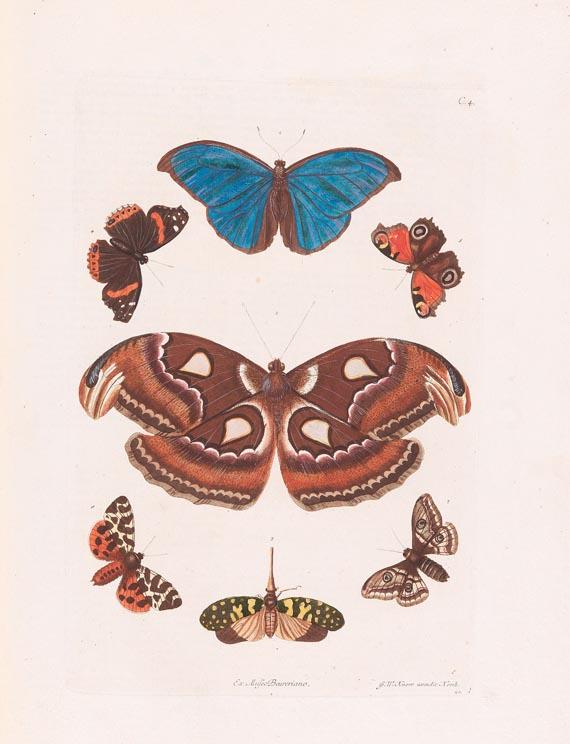 Georg Wolfgang Knorr - Naturalien Cabinet 2 Bde. 1766 - Weitere Abbildung
