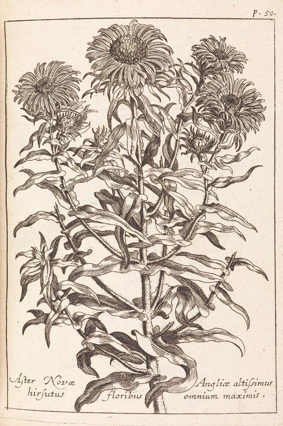 Johann Christoph Volckamer - Flora Noribergensis, 1700