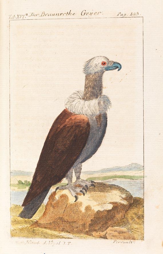 Georges Louis Leclerc comte de Buffon - Naturgeschichte der Vögel, 15 Bde., 1772