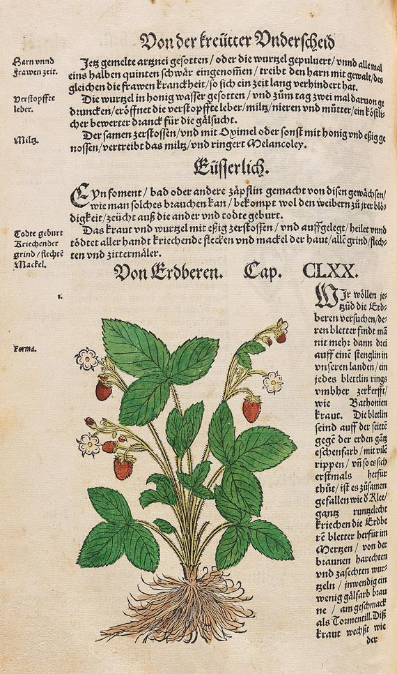Hieronymus Bock - Kräuter Buch, 1630