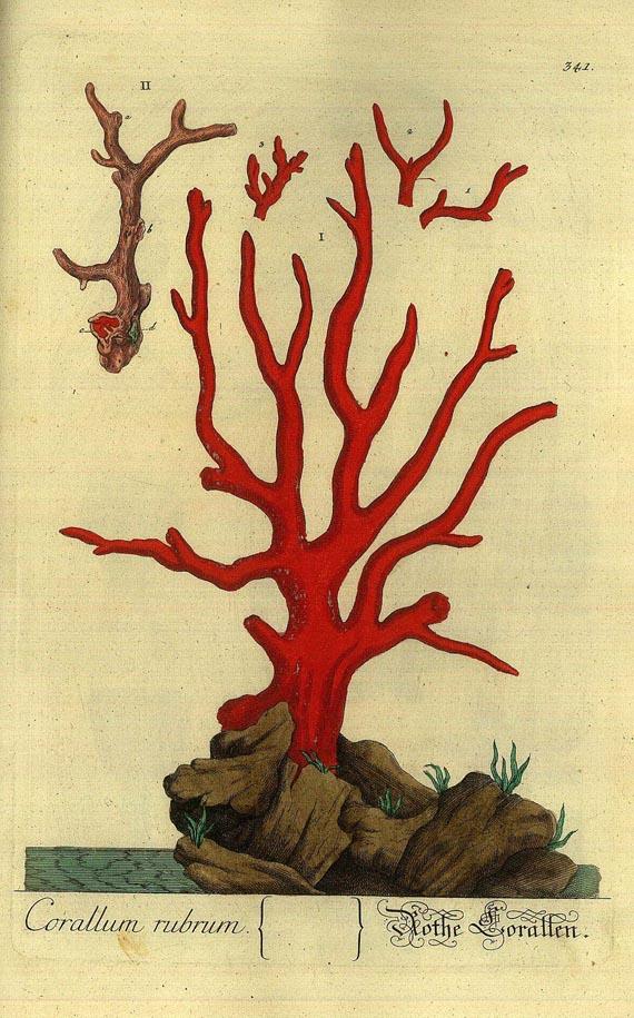 Elisabeth Blackwell - Herbarium. 4. Bd. (1760)