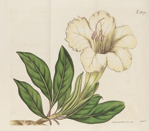 William Curtis - The botanical magazine, 1790-1838. Zus. 66 in 45 Bdn.