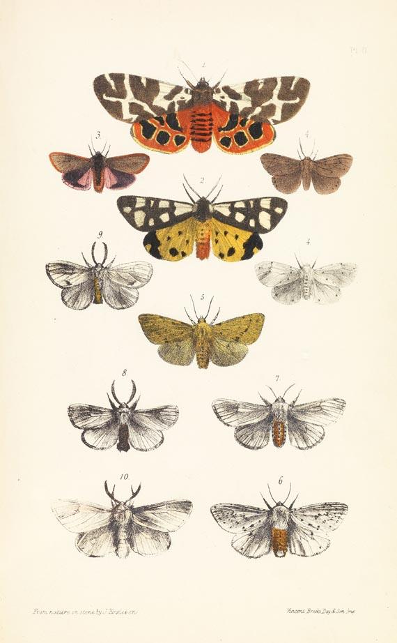 Francis Orpen Morris - British Moths, 4 Bde., 1872.