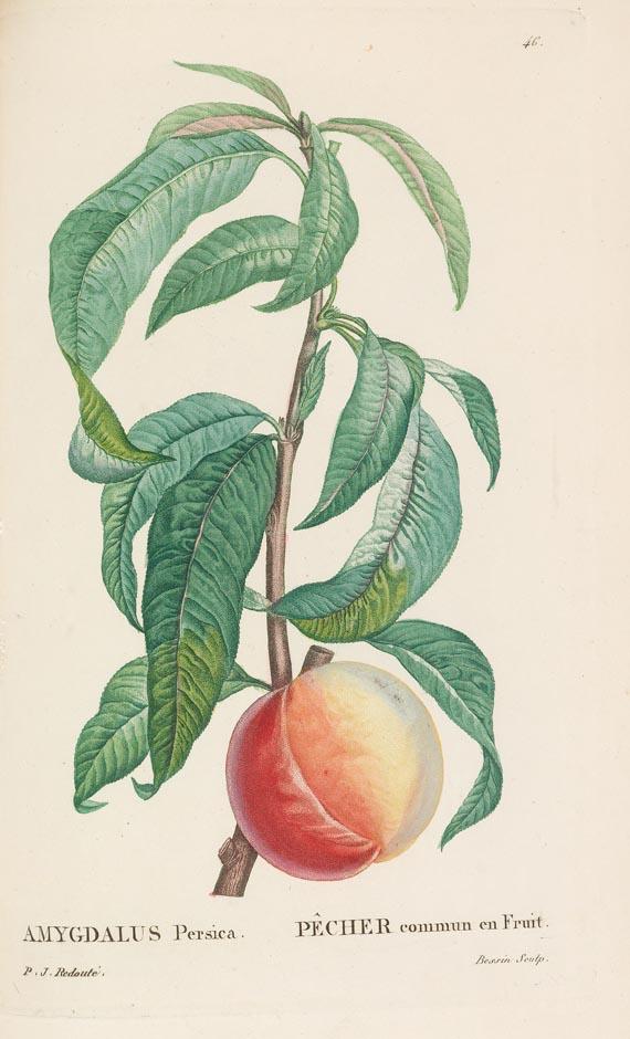 Pierre Joseph Redouté - Rousseau, La Botanique 1825