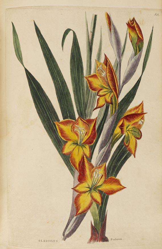 Johann Ernst Christian Walter - Flora (Teilstück). 1835-1847