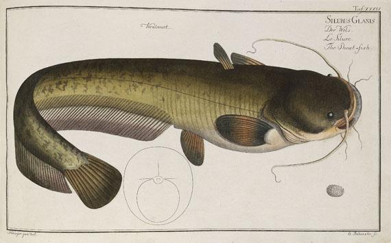 Marcus Elieser Bloch - Oecon. Naturgeschichte der Fische/d. ausländ. Fische. 5 Text- u. 4 Tafelbde. Zus. 9 Bde. 1782-87.