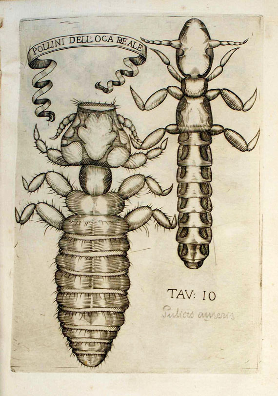 Francesco Redi - Degl'Insetti, 1674