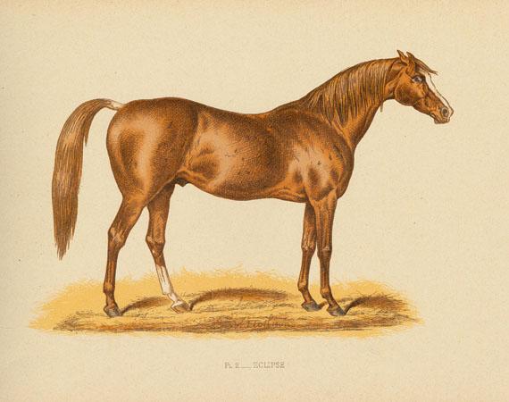 Pferde - S.-F. Touchstone, Chevaux de course. 1889.