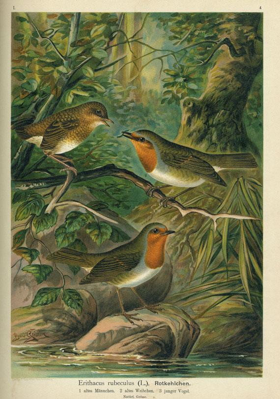 Johann Andreas Naumann - Vögel Mitteleuropas. 1897-1905. 12 Bde.