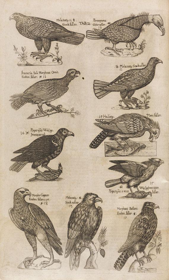 Ulisse Aldrovandi - Ornithologiae. 1610.