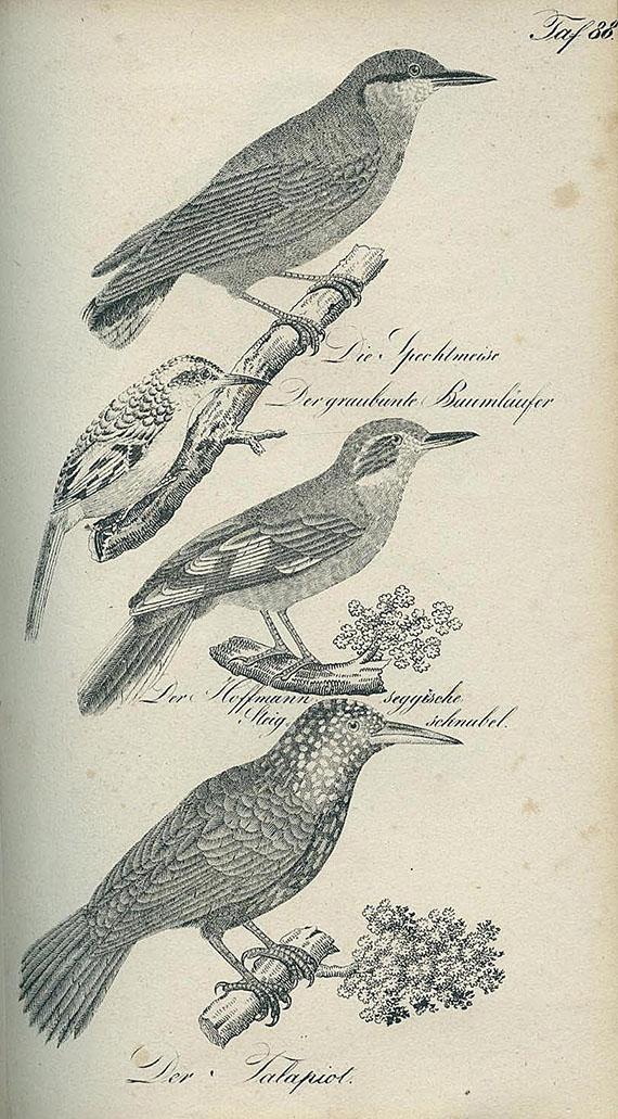 Buhle, C. A. A. - Die Naturgeschichte. 1835. 2 Bde.