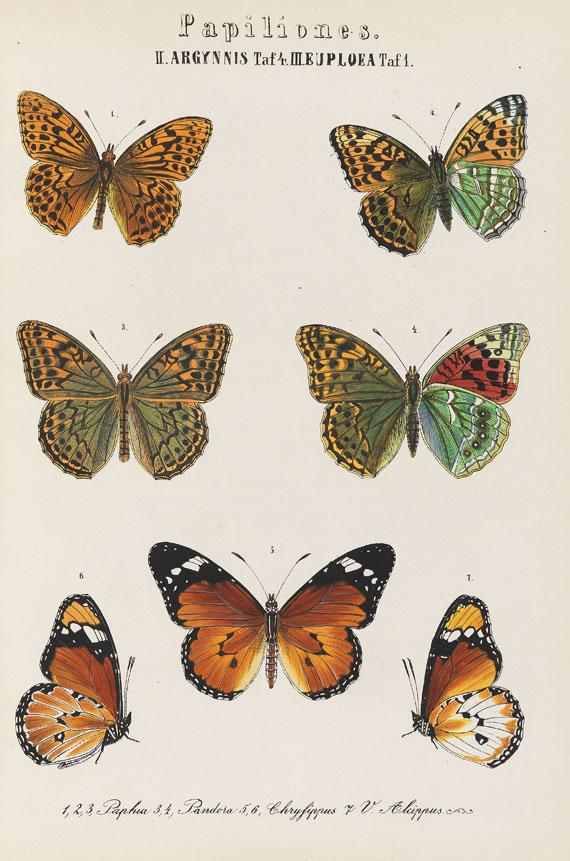 Sigmund von Praun - Europäische Schmetterlinge. 1858-74. 3 Bde.