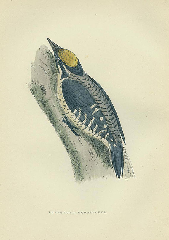 Francis O. Morris - History of British birds. 1903. 6 Bde.