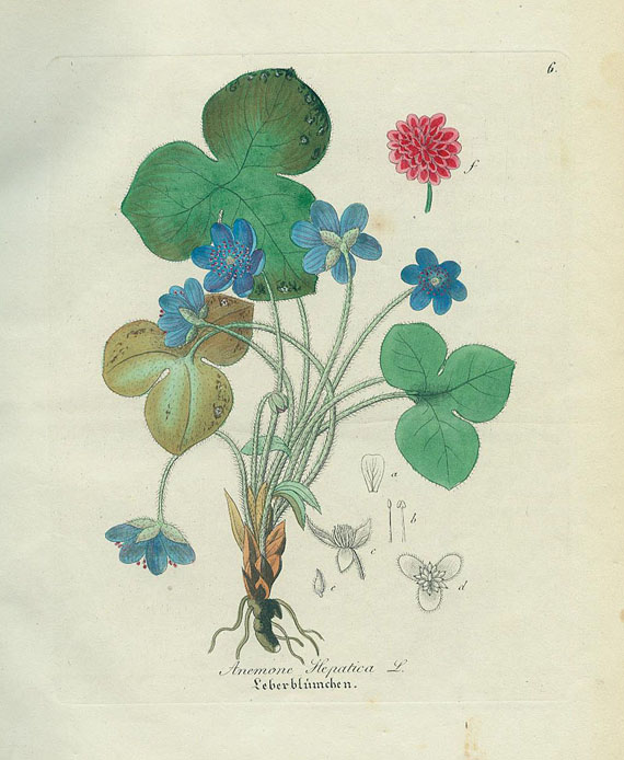 David Nathan Friedr. Dietrich - Forstflora. 1840.