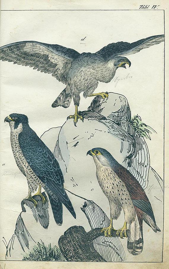 Naturgeschichte - Konvolut Naturgeschichte, 5 Werke in 6 Bdn. Um 1850-90.