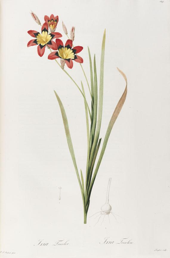 Pierre Joseph Redouté - Liliacées. 8 Bde. 1802-16. - Weitere Abbildung