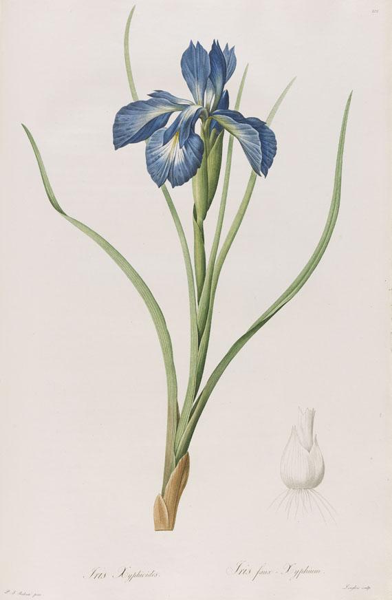Redouté - Liliacées. 8 Bde. 1802-16.