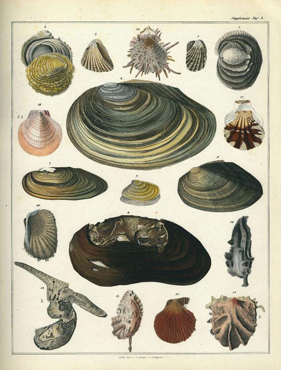 Lorenz Oken - Naturgeschichte. 1833-43. 14 Bde.