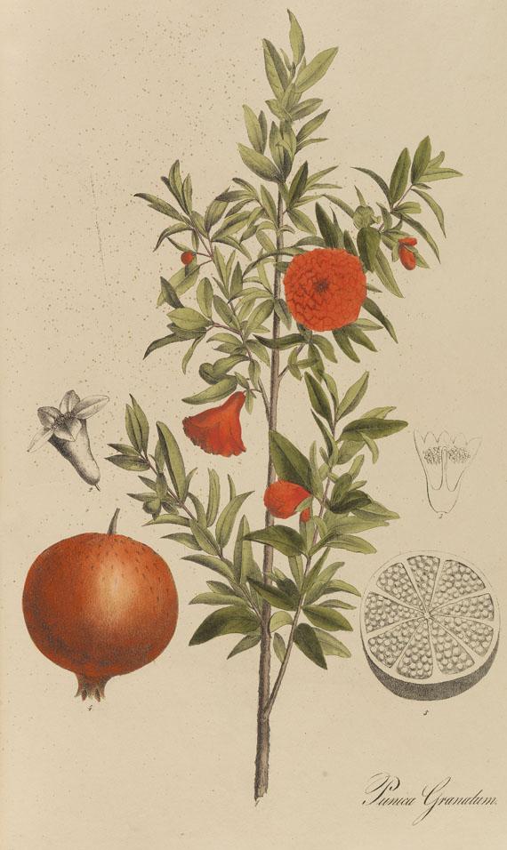 Theodor F. L. Nees von Esenbeck - Sammlung Offizineller Pflanzen. 2 Bde. 1828