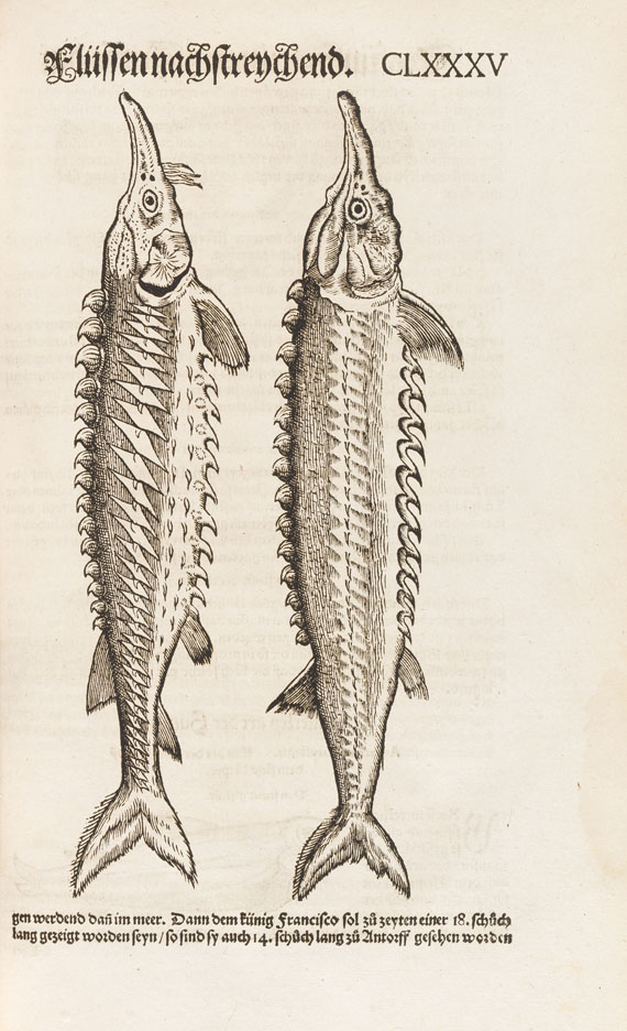 Conrad Gesner - Vogel-, Thier-, Fisch- und Schlangenbuch, 1575-89.