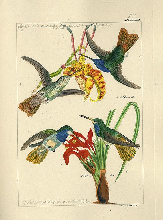 Ludwig Reichenbach - Trochilinarum enumeratio. 1855. 2 Bde.