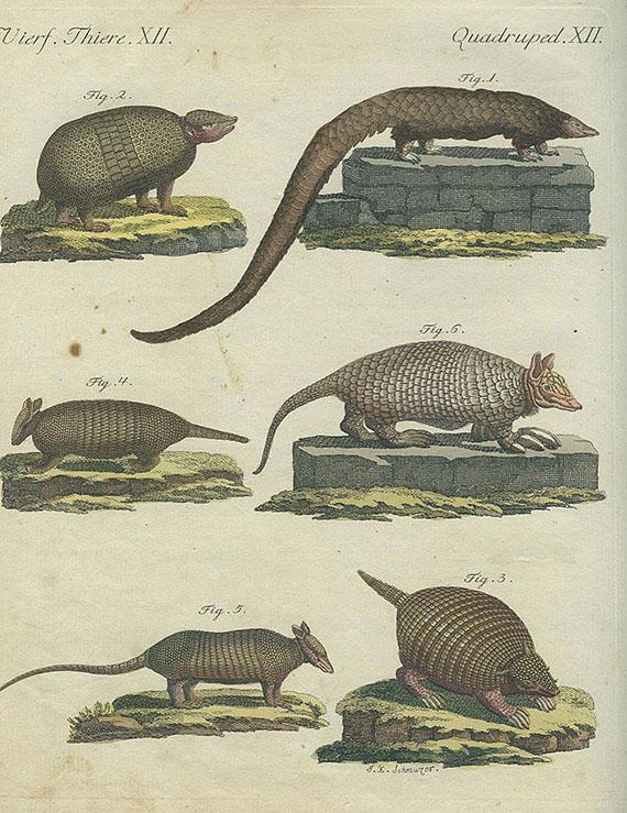 Friedrich Johann Justin Bertuch - Bilderbuch. 5 Bde. 1801.