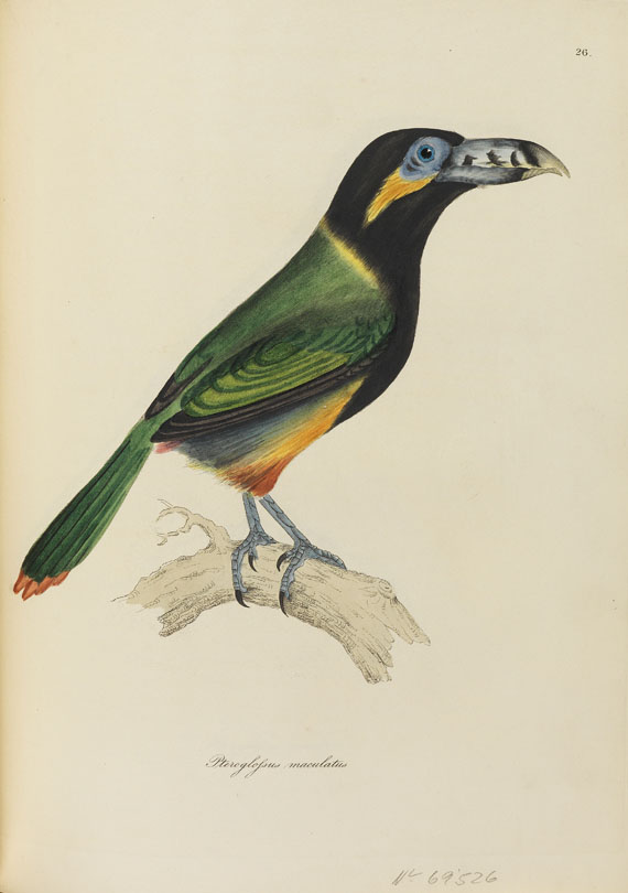 William Jardine - Illustrations of ornithology. 1826-35. 3 Bde.