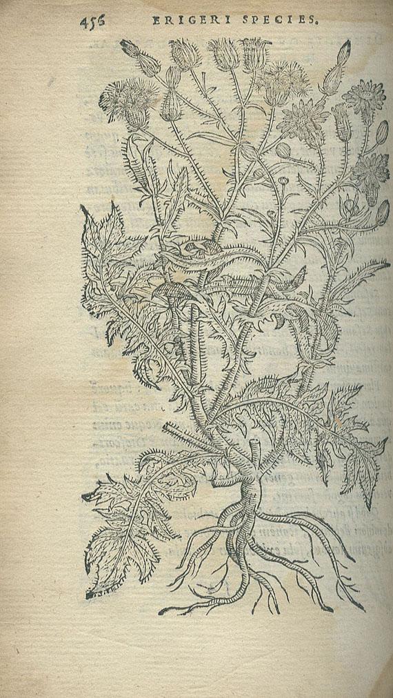 Rembertus Dodonaeus - Purgantium. 1574.