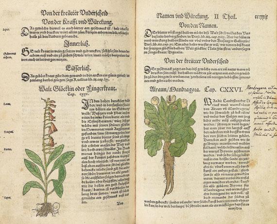 Hieronymus Bock - Kreuter Buch. 1560.
