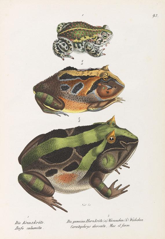 Heinrich Rudolf Schinz - Naturgeschichte und Abbildungen der Reptilien. 1833