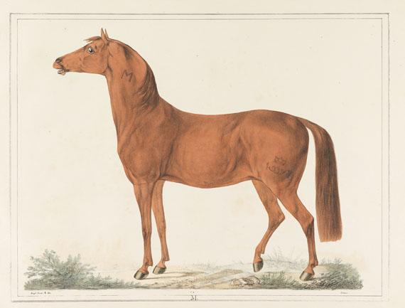 Christian David Gebauer - Det kongelige danske Stutterei. 1822. - Weitere Abbildung