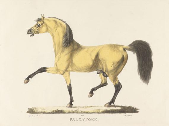 Christian David Gebauer - Det kongelige danske Stutterei. 1822.